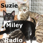 Suzie, Miley and Radio (mom and kittens) were adopted from the Cat House and Adoption Center on Sunday, August 16, 2009.