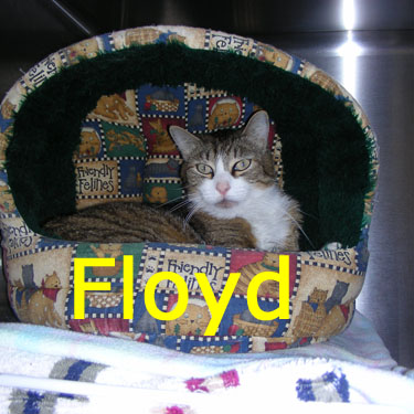 Floyd was adopted from the Cat House and Adoption Center on Saturday, August 15, 2009