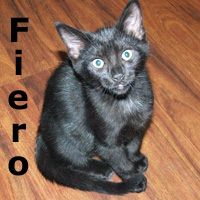 """Diplomat and Fiero (brothers) were adopted from the """"Paws for the Cause"""" event on Sunday, August 9, 2009."""