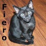 "Diplomat and Fiero (brothers) were adopted from the ""Paws for the Cause"" event on Sunday, August 9, 2009."