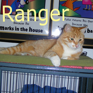 Ranger was adopted from the Cat House and Adoption Center on Sunday, August 16, 2009.