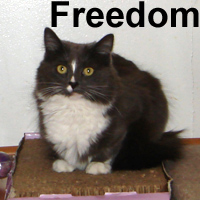 Freedom was adopted from the Cat House and Adoption Center on Saturday, July 18, 2009.