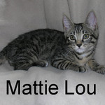 Mattie Lou and Rucker were adopted from the Cat House and Adoption Center on Saturday, July 18, 2009.