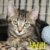 Will Tweedy and Sassy were adopted from the Cat House and Adoption Center on July 25, 2009.