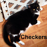 Checkers was adopted fro the Cat House and Adoption Center on Saturday, August 8, 2008.