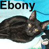 Ebony was adopted from the Cat House and Adoption Center on Tuesday, September 1, 2009.