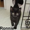 Ronnie and Raisin were adopted from the Cat House and Adoption Center on Saturday, July 18, 2009.