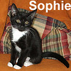 Sophie and Amber were adopted from the Cat House and Adoption Center on Sunday, August 23, 2009.