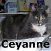 Ceyanne was adopted from the Cat House and Adoption Center on Monday, August 31, 2009.