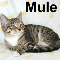 Mule was adopted from the Cat House and Adoption Center on Saturday, July 18, 2009.