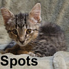 Mr. Spots was adopted from his foster home on Friday, August 21, 2009.