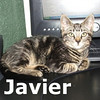 Javier and Russell were adopted together from the Cat House and Adoption Center on Saturday August 22, 2009.