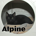 Cosmicky and Alpine were adopted from the Cat House and Adoption<br /> Center on Thursday, August 6th, 2009.