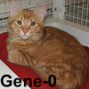 Gene-O and Ellie were adopted from the Cat House and Adoption Center on Saturday, July 18, 2009.