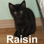 Raisin and Ronnie were adopted from the Cat House and Adoption Center on Saturday, July 18, 2009.