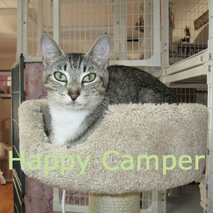 """Happy Camper"" was adopted from the Cat House and Adoption Center on Saturday, August 15, 2009"