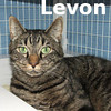 Levon was adopted from the Cat House and Adoption Center on Saturday, September 5th, 2009.