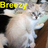 "Breezy was adopted from the ""Paws for the Cause"" event on Sunday, August 9, 2009."