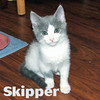 Me-Cha and her kittens, Gilligan (F) and Skipper (M) were adopted<br /> from the Cat House and Adoption Center on Wednesday, August 5th, 2009.<br /> This lucky family gets to stay together!