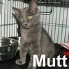 Mutt and Jeff were adopted from the Cat House and Adoption Center on Thursday, August 29, 2009.