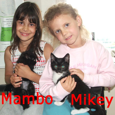Mambo (F) and Mikey (tux) were adopted from the Cat House and Adoption Center on Saturday, August 15, 2009.
