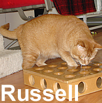 Hussel Russel was adopted from the Cat House and Adoption Center on Friday, July 31, 2009
