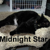 Midnight Star was adopted from the Cat House and Adoption Center on Saturday, July 18, 2009.
