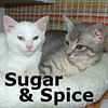 Sugar and Spice (sisters) were adopted from the Cat House and Adoption Center on Friday August 22, 2009.