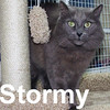 Stormy was adopted from the Cat House and Adoption Center on Friday, August 21, 2009.