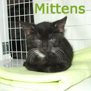 Mittens was adopted from the Cat House and Adoption Center on Saturday, August 15, 2009.