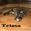 Trista was adopted from the Cat House and Adoption Center on Saturday, December 5, 2009.<br /> <br /> All I need is love ...<br /> Just a little love.  Trista gives more love than she takes and, she is anxious to have a home where she can spend time showing you her appreciation.