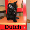 Dutch was adopted from the Cat House and Adoption Center on Saturday, December 5, 2009.<br /> <br /> Dutch is a gentleman. He is sleek and handsome and would be a fine<br /> addition to your family.<br /> He has very nice manners, and gentle personality.