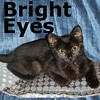 Bright Eyes was adopted from PetCo on Sunday, November 8, 2009. Bright Eyes is a raven haired beauty who is not shy about wanting to win you over. She loves to snuggle and help her foster mom type on the computer. She may not spell everything correct yet, but she is young still and would be happy to let you teach her.