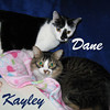 Dane and Kayley (brother and sister) were adopted from the Cat House and Adoption Center on Saturday, November 28, 2009.<br /> <br /> Dane and Kayley <br /> <br /> Two Perfect -<br /> <br /> This brother and sister are dashing, darling and, inseparable. <br /> <br /> They will ease into your life and you will soon wonder how much you were missing without them and just how perfect it is they are.