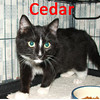 Cedar and Spruce were adopted from the Cat House and Adoption Center on Tuesday, December 1, 2009.