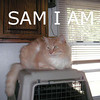 Sam was adopted from his foster home on Thursday, November 12, 2009.