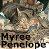 Myree Penelope was adopted from the Cat House and Adoption Center on Saturday, November 22, 2009.<br /> <br /> Myree Penelope. Surfing the neighborhood googled great results. Not knowing whether to yahoo or hotmail, Myree consulted Ask Jeeves and got her answer. Safe is great, but it is now time for crusin' Craig's List for a home.