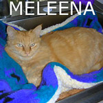 Meleena was adopted from the Cat House and Adoption Center on Saturday, November 28, 2009.<br /> <br /> Take a chance on me … <br /> <br /> Survival was a struggle and challenging at times, but rest and comfort has finally arrived for this very special and beautiful girl. Meleena will flourish in a home with stability.