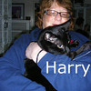 Harry was adopted from the Cat House and Adoption Center on Wednesday, November 25, 2009.