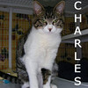 Charles was adopted from the Cat House and Adoption Center on Monday, October 26, 2009.