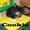 Cookie and Murphy (brother and sister) were adopted together from the Cat House and Adoption Center on Saturday, December 5, 2009.<br /> <br /> Cookie Cookie, who wants a Cookie! What a sweet treat it would be for Cookie to find a home with you! She is looking for a little time to settle in before winning you over with her kitten charm.