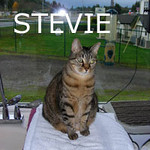 Stevie was adopted from the Cat House and Adoption Center on Monday, November 16, 2009.  <br /> <br /> Stevie. Onward and upward. Stevie's owner was taken away by paramedics while she and the other cats were left to tend to the house. Stevie is looking to find someone that wants to be owned by a cat. She is anxious to have companionship and share her daily pleasures with you.