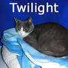 Twilight was adopted from the Cat House and Adoption Center on Saturday, December 5, 2009.<br /> <br /> Star Light, Star Bright<br /> <br /> This petite little girl was rescued from a hoarding situation where denial was a way of life.  Twilight is grateful for all the goodness that has come her way, but she has a wish … I wish I may, I wish I might, find a good home that will be for life.