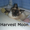 Harvest Moon was adopted from the Cat House and Adoption Center on Sunday, November 8, 2009.