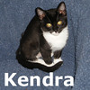 Kendra the kitten was adopted from the Cat House and Adoption Center on Saturday, October 31, 2009.<br /> <br /> Who says tuxedos are only for boys? Kendra wears her stylish inky suit<br /> with the dignity and sophistication of a princess. She is sweet and<br /> cuddly and as cute as all get out! When it is time to play she is more<br /> roustabout than royalty, but she is a kitten after all.