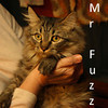 Mr. Fuzz was adopted from the Cat House and Adoption Center on Saturday, December 5, 2009.