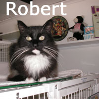 Robert was adopted from the Cat House and Adoption Center on Saturday, October 24, 2009.
