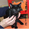 Zeffie was adopted from the Cat House and Adoption Center on Tuesday, December 1, 2009.<br /> <br /> Zeffie is a sweet and rambunctious girl. She is a busy kitten and always on the go, but will take the time to slap you a high five on her way by. Imagine all the fun you would have adopting her with a litter mate!