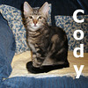 Cody and Corky were adopted together from the Cat House and Adoption Center on Saturday, November 22, 2009.<br /> <br /> Cody is a show stopper with his dashing good looks and award winning personality. He loves to play the part of the quirky boy next door, and would be tickled to show you his kitten skills. He will get along famously with one of his co-stars for his lifetime role in your home.