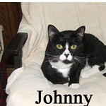 Johnny was adopted from the Cat House and Adoption Center on Saturday, April 24, 2010.<br /> <br /> Johnny<br /> <br /> Johnny Cat<br /> <br /> Large lovable boy with a playful side. Johnny is sweet and easy going and looking for a permanent place in your heart and home.